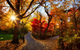 Обои: природа, park, trees, colorful, leaves, walk, парк, sunset, path, листья, autumn, fall, деревья, дорога, осень, закат, лес, forest, nature, colors, road