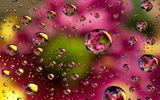 Обои: abstract, floral, colors, bubbles, пузыри, абстракция, colorful