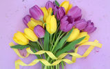 Обои: tulips, цветы, тюльпаны, fresh, букет, flowers, yellow, purple, лента