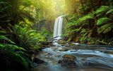 Обои: Hopetoun Falls, Австралия, лес, папоротник, Aire River, Victoria, The Otways, Australia, Great Otway National Park, водопад, река