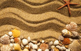 Обои: sand, marine, песок ракушки, beach, starfish, seashells, texture