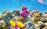 Обои: underwater, fishes, world, ocean, подводный мир, coral, океан, tropical, reef, рыбки, коралловый риф