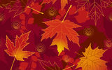 Картинки на телефон: autumn, fall, maple, leaves, осенние, листья