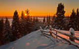 Обои для рабочего стола: Winter, Firs, Sunrise, Nature, Sun, Sun, Snow, Landscape
