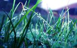 Обои: макро, plants, drops, зелень, природа, nature, капли, растения, greens, close-up, роса, dew
