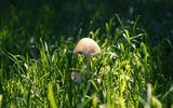 Обои: лес, close-up, макро, shadow, nature, тени, трава, грибы, grass, forest, mushrooms