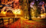 Обои для рабочего стола: colors, walk, trees, nature, colorful, path, road, park, leaves, autumn, fall, листья