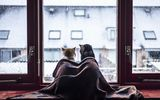 Картинки на телефон: cat, snow, winter, window, blanket