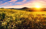 Обои: закат, meadow, field, sunset, луг, цветы, flowers, поле