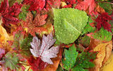 Картинки на телефон: осень, листва, autumn, drop, лист, foliage, leaf, капля