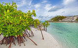 Картинки на телефон: Bahamas, Galloway, beach, мангры, Long island, mangrove