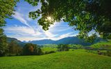Картинки на телефон: summer, tree, valley, sunlights