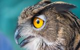 Картинки на телефон: Owl, Face, closeup