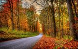 Картинки на телефон: leaves, walk, autumn, fall, colorful, colors, path, Road, forest, park, trees