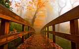 Картинки на телефон: Road, walk, leaves, forest, park, fall, trees, path, autumn, colorful, colors