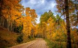 Картинки на телефон: colors, walk, path, park, Road, fall, trees, autumn, colorful, leaves, forest
