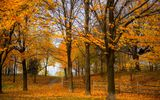 Картинки на телефон: Road, fall, trees, colors, autumn, colorful, forest, leaves, path, walk, park