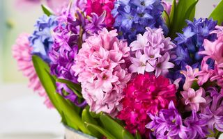 Обои hyacinths, flowers, bouquet, цветы, букет, гиацинты