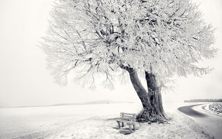 Обои white, snow, tree, bench