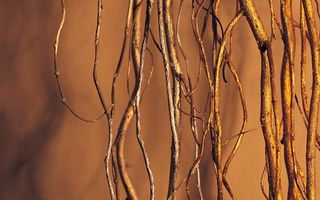 Обои nature, roots, tree, Brown