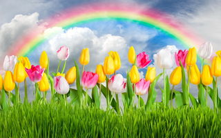 Обои flowers, тюльпаны, sunshine, rainbow, colorful, meadow, grass, sky, весна, цветы, tulips, spring