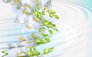 Картинка beauty, мacro, phalaenopsis, branch, splash, tenderness, petals, flowers, white, Orchid, water