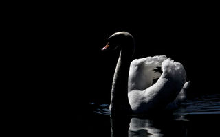 Картинка lake, swan, beautiful, peaceful, mmaglica photo, mmaglica, dark, photo
