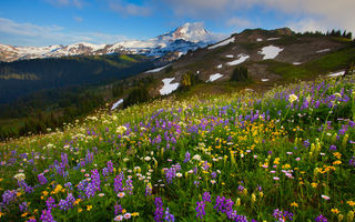 Обои washington, summer wildflower season - skyline divide, mount baker area