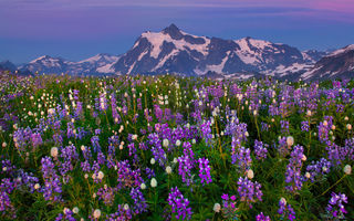 Обои washington, mount baker area, the purple hour on mount shuksan - skyline divide