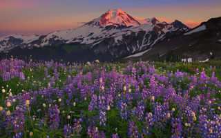 Картинка washington, a moment of alpenglow - skyline divide, mount baker area