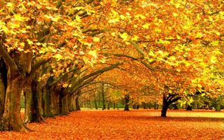 Обои trees, fall color, leaves, break of autumn