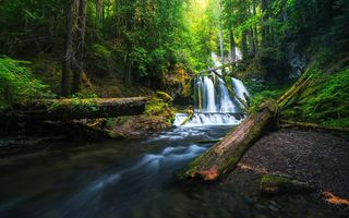 Картинка Lower Panther Creek Falls, Washington, лес