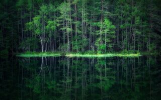 Обои лес, reflection, water, Takeshi Mitamura, вода, forest, отражение
