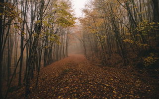 Обои fall, chasingfog, fog, forest
