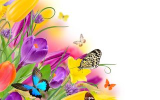 Обои бабочки, flowers, весна, tulips, spring, purple, fresh, тюльпаны, beautiful, colorful, butterflies, цветы, yellow