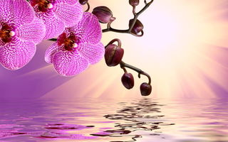 Обои цветы, beautiful, pink, orchid, reflection, sunshine, орхидея, water, flowers