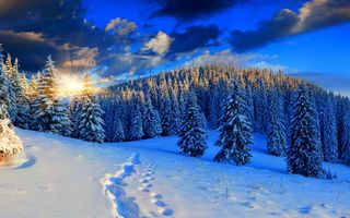 Картинка snow, снег, beautiful, forest, white, sunset, winter, nice, path, nature, зима, природа, пейзаж, cool, небо, road, sky