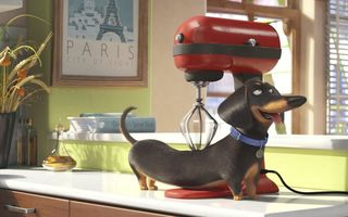 Картинка collar, Paris, wheat, mixer, The Secret Life of Pets, olive oil, apple, comedy, Dachshund, fruit, animal, cinema, massage, movie, dog, countertop, cup, kitchen, window, 2016, cartoon, pyrex, frame, curtain, graphic animation, film, Official, book, oil