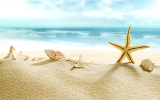 Обои paradise, beach, shore, starfish, sea, sand, пляж, summer, море, песок, blue, берег, seashells, ракушки
