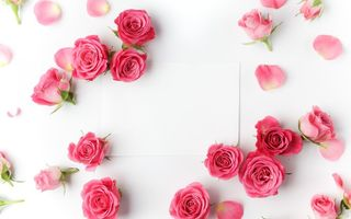 Картинка romantic, valentine`s day, roses, розы, pink, flowers, бутоны