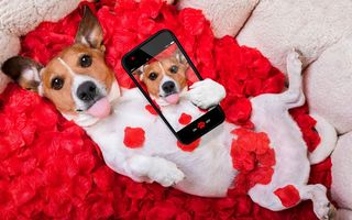 Обои собака, funny, red, love, petals, rose, romantic, лепестки, phone, valentine, красная роза, dog