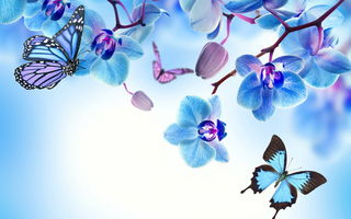 Обои orchid, blue, цветы, butterflies, бабочки, flowers, beautiful, орхидея