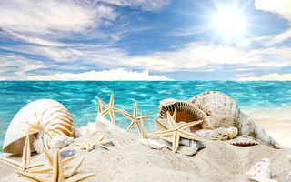 Обои seashells, ракушки, звезды, sand, солнце, sea, песок, starfishes, summer, sunshine, beach, море, пляж