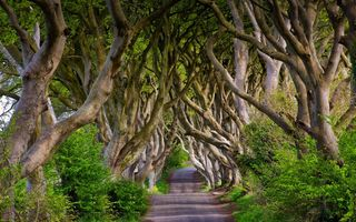 Обои England, аллея, Bregagh Road, деревья, Северная Ирландия, Англия, бук, Northern Ireland, Dark Hedges, дорога