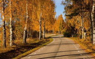 Обои nature, colors, парк, дорога, trees, leaves, осень, листья, road, природа, park, лес, autumn, fall, path, colorful, forest, деревья, walk