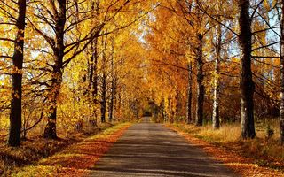 Обои nature, forest, colors, дорога, autumn, парк, road, деревья, colorful, fall, осень, природа, trees, path, leaves, листья, park, walk, лес