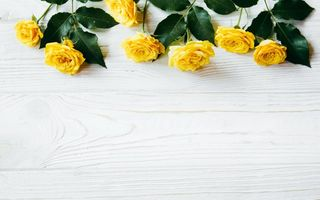 Картинка цветы, flowers, wood, roses, summer, желтые, yellow, розы