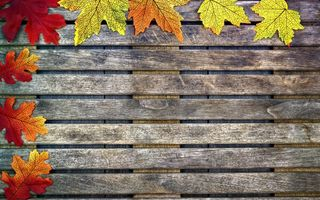 Обои осень, colorful, wood, дерево, leaves, autumn, клен, листья, maple, осенние