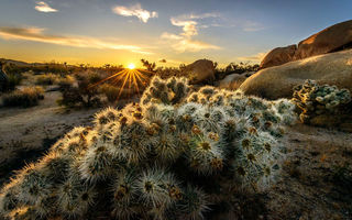 Обои Joshua Trees National Park, горы, деревья, США, Калифорния, солнце, закат, лучи