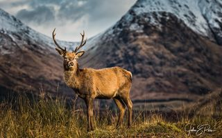 Обои горы, Reindeer, photographer John & Pou, олень, unspoiled Glen Etive, A Scottish icon, Шотландия